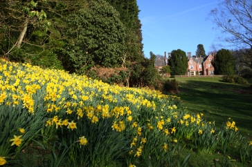 daffs and west view