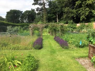 walled garden lavender2